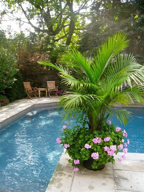 35 best palms in containers images on pinterest tropical