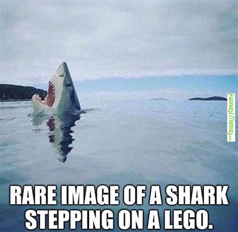 Shark Meme - visit www amazingdogtales com for the best funny dog joke