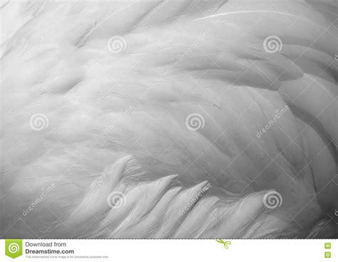 preteen girl with white feathers stock image image of white feathers texture background stock photo image