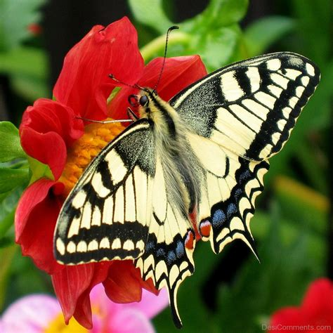 of a butterfly butterfly pictures images graphics for