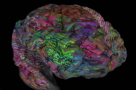 for the brain scientists map brain s thesaurus to help decode inner