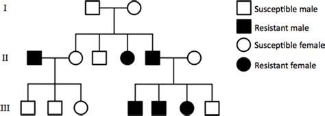 inheritance pattern pedigree quiz solved the pedigree below shows the inheritance pattern o