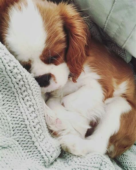 puppy things best 25 dogs ideas on