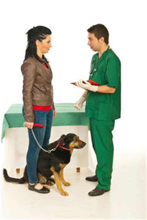 talking to owner more important pet health facts your vet wants you to