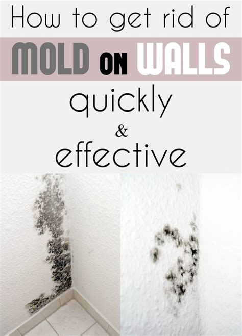 How To Get Rid Of Mold In The Bathroom Walls by How To Get Rid Of Mold On Walls Quickly And Effectively