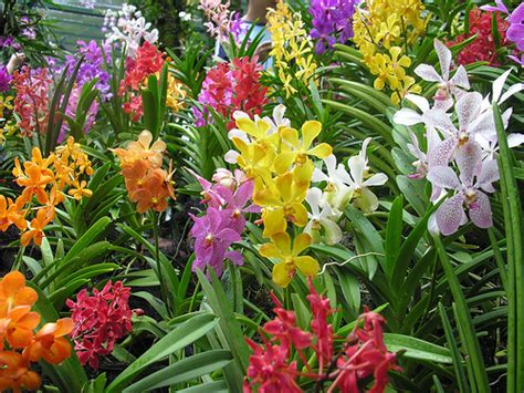 Orchid Garden by Home Orchid Garden The General Requirements Interior