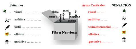 imagenes de umbrales sensoriales preguntas
