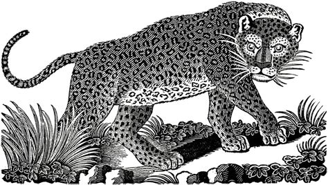 domain leopard image the graphics domain leopard image the graphics