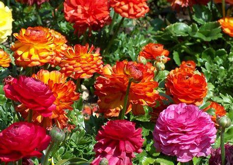 Garten Blumen by Blumen Pflanzen Hecken