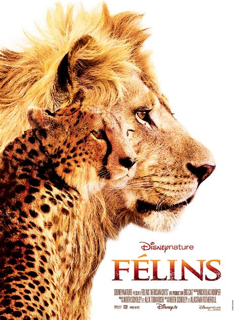 film avec un lion noir f 233 lins photos et affiches allocin 233