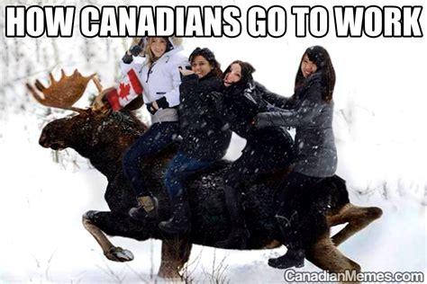 Canadian Moose Meme - anime canada meme