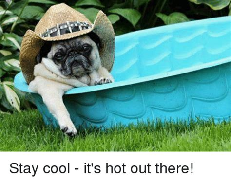 Stay Cool Meme - stay cool it s hot out there meme on sizzle