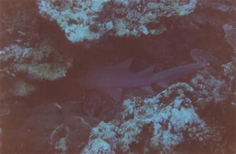 Quand Le Dormeur S éveillera by Requins Et Raies