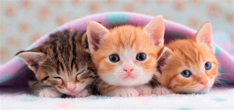 imagenes tiernas gatitos gatitos issuespost