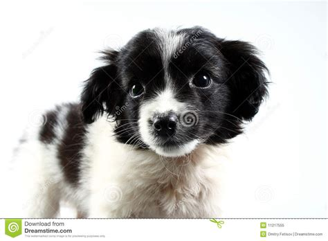 small puppies for free small puppy royalty free stock photo image 11217555