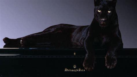 wallpaper black panther black panther wallpaper 1920x1080 45761