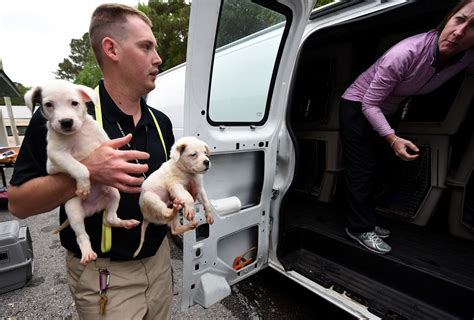 puppies dothan puppy transports helping with overcrowding at dothan animal shelter local