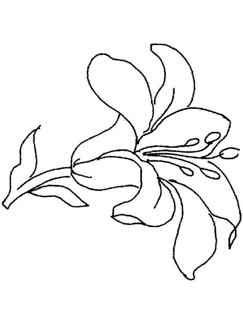 coloring page lily flower lily flower coloring pages download and print lily flower