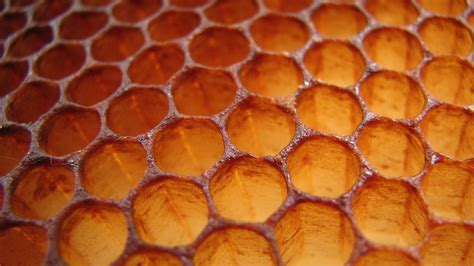 pattern and structure found in nature product design honeycombs hexagons a product of simple physics nova