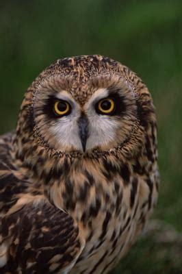 owl species of alabama animals mom me