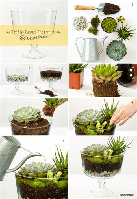 terrariums vases and two other diy ideas made from a