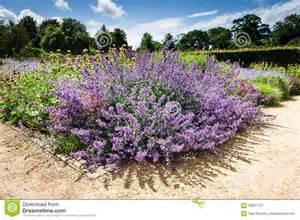 Purple Landscaping Flowers - flor roxa planta constante plantas de jardim foto de