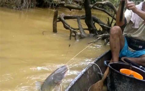 cara membuat umpan mancing ikan mas air keruh cara memancing di sungai air keruh 2018 mancing ikan