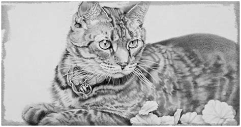 imagenes a lapiz de gatos dibujos de gatos a lapiz paso a paso archivos dibujos de