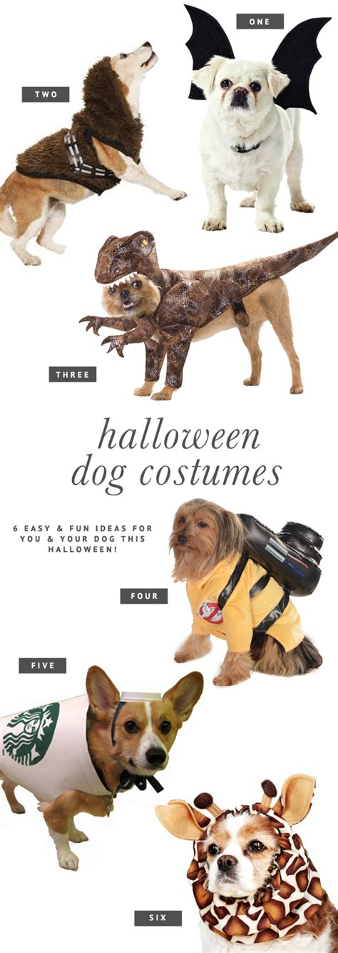halloween themes with dogs pretty fluffy