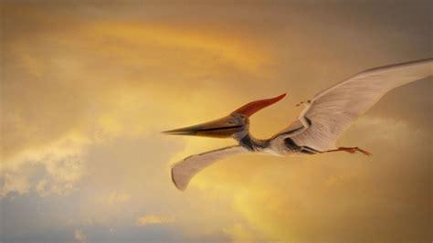 pterosaurs adapted  flight youtube