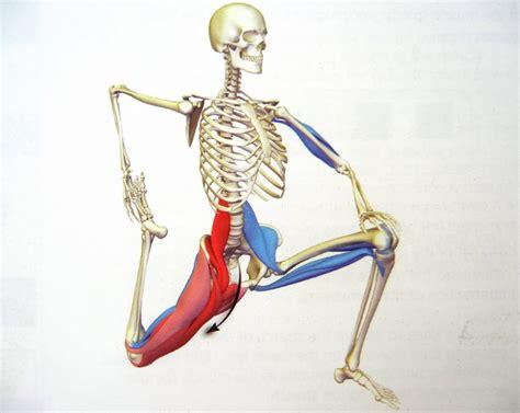 iliopsoas diagram iliopsoas anatomy human anatomy diagram