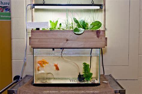 diy aqua farm aquaponics aquarium kit