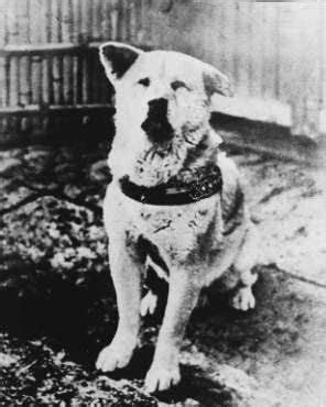 Hachiko Made in USA