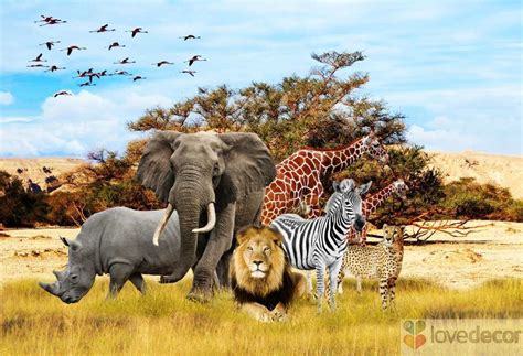 Sunset Wall Murals african animals wallpaper live african animals