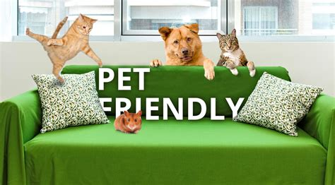our first pet friendly apartments news ginosi apartels