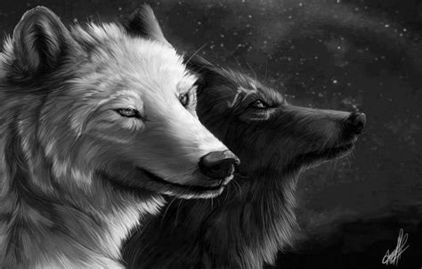 black and white wolf wallpaper black and white wolf wallpaper wallpapersafari