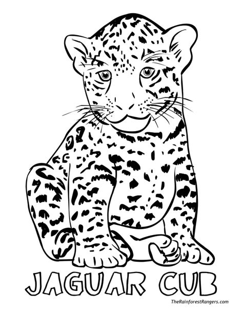 coloring pages of jaguar baby jaguar coloring pages az coloring pages