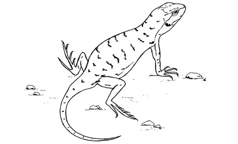 anole lizard coloring page green anole lizard coloring pages sketch coloring page