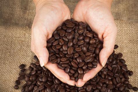 Kopi Sumatera Barat Gayo Coffee kopi yang berasal dari sumatera specialtycoffee co id