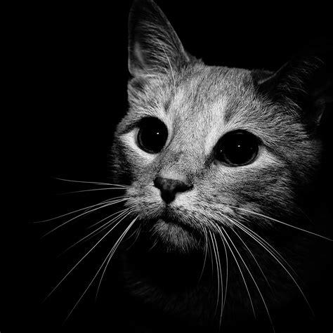 cat  black  white ipad retina wallpaper  iphone