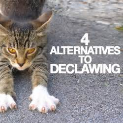 4 alternatives to declawing skinny ms
