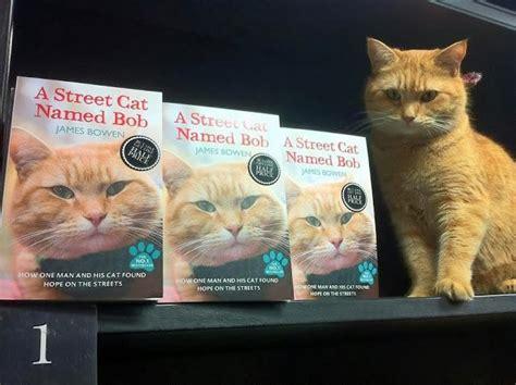 libro una noche un gato sorteo cinco ejemplares del libro quot un gato callejero llamado bob quot bigotes de gato