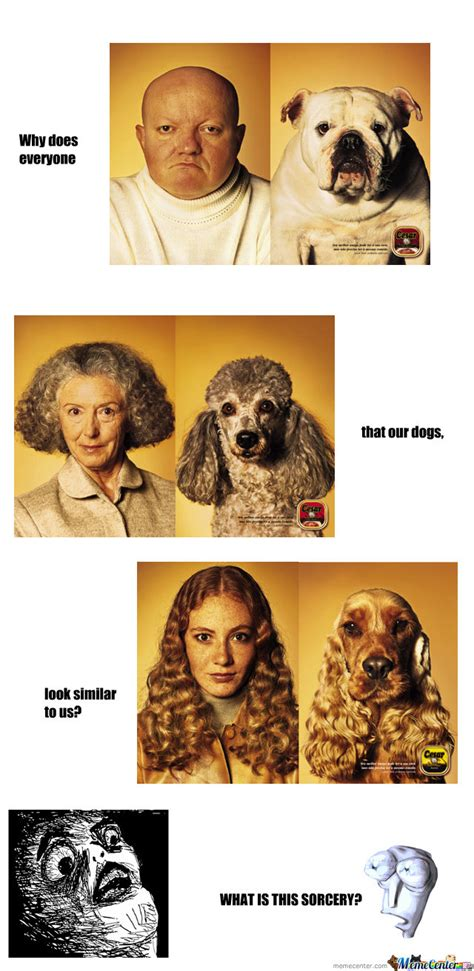puppy everywhere dogs dogs everywhere by william ogden 585 meme center
