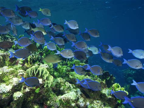 colorful coral reef fish wallpaper wallpaper hd background desktop