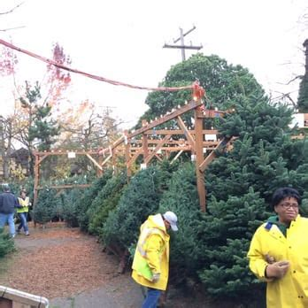 best seattle tree lot sasg seattle area support groups tree lot 31 reviews trees capitol
