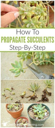 How To Propagate Succulents From Cuttings And Offsets - tips on how to propagate succulents from leaves see how