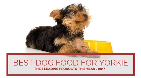 yorkie puppies food best food for yorkie the five leading products this year 2017 hi5dog