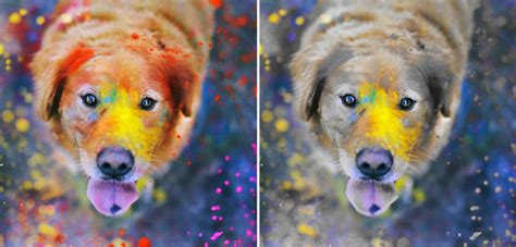 can dogs see in color 18 amazing facts about dogs that will make you your