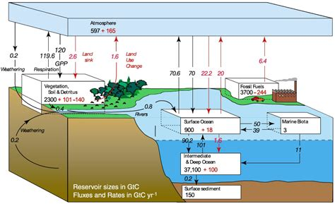 carbon sink won t the carbon sinks absorb the co2 jean marc