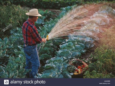 watering vegetable garden agriculture farm a watering his backyard